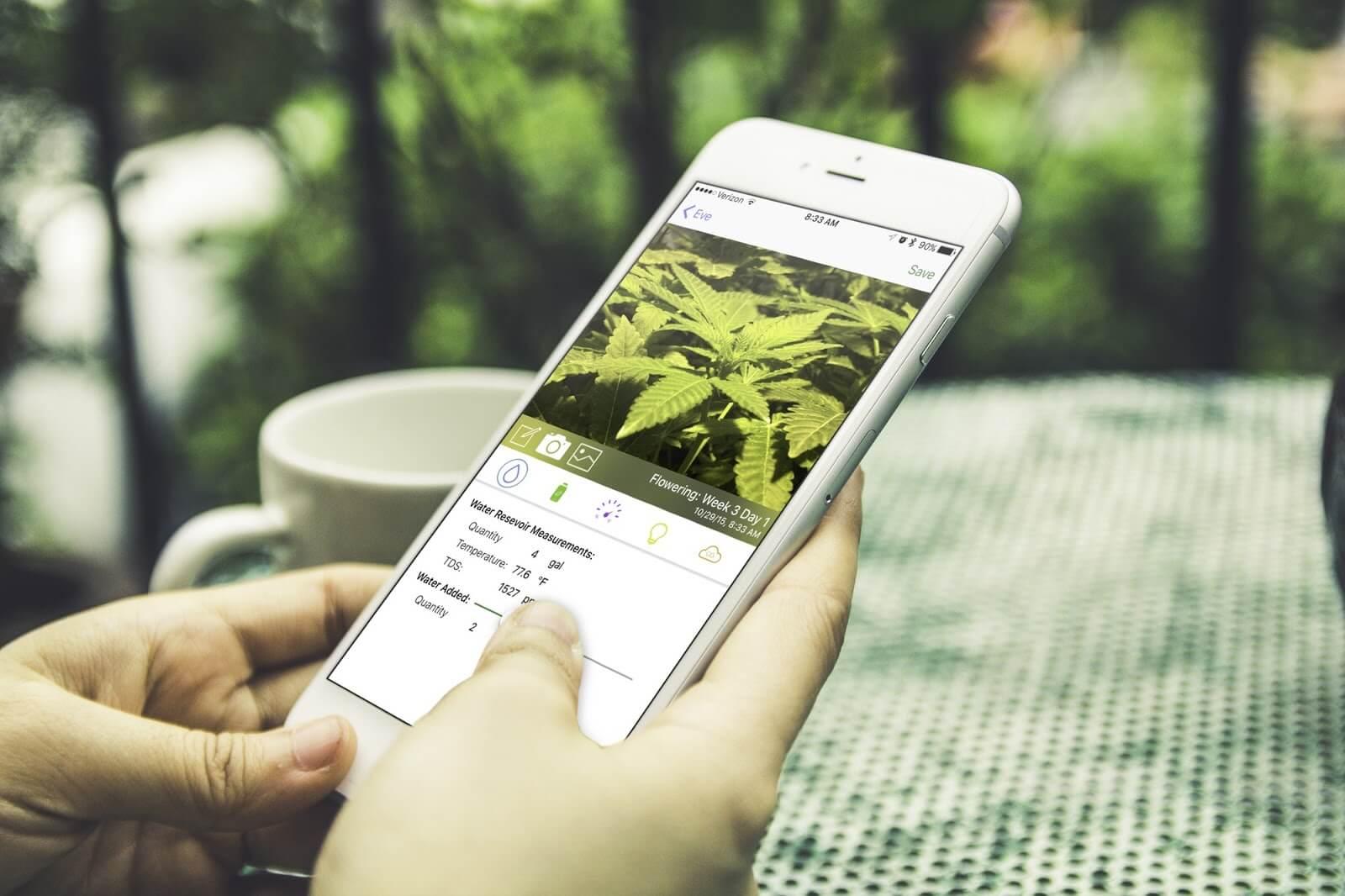 marijuana in the Google Play Store
