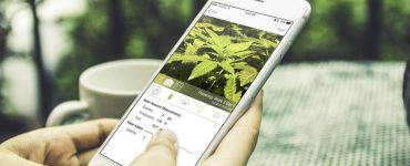 marijuana in the Google Play Store